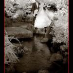 Leanne & Nigel's Wedding @ Morikami